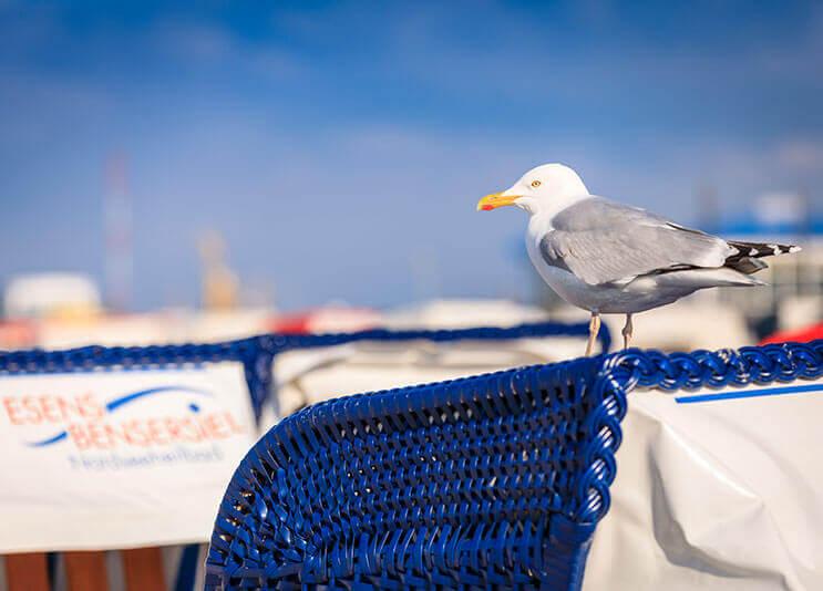 Moeve am Strand