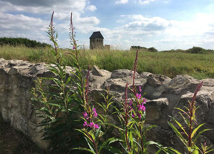 Landschaft mit Blumen
